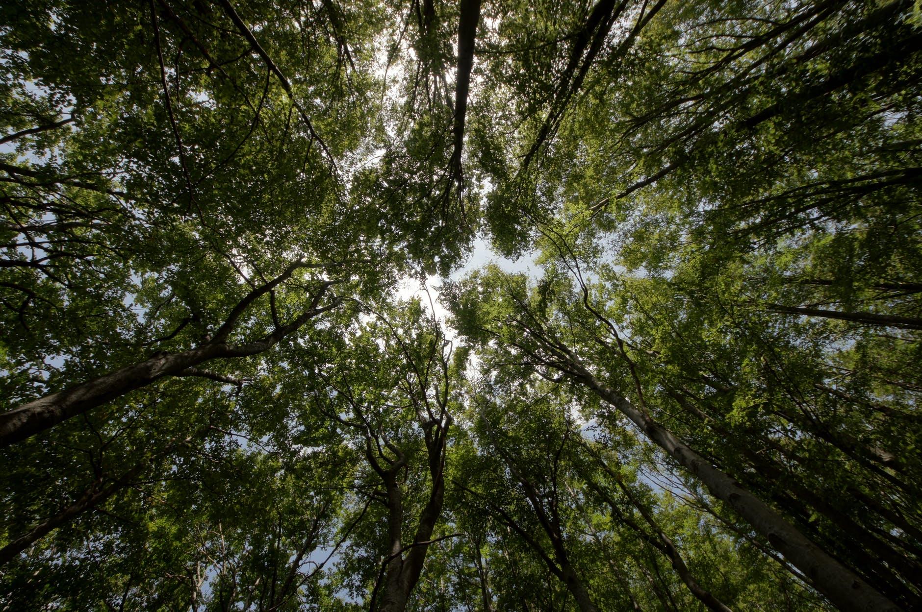 importancia-de-los-bosques.jpeg
