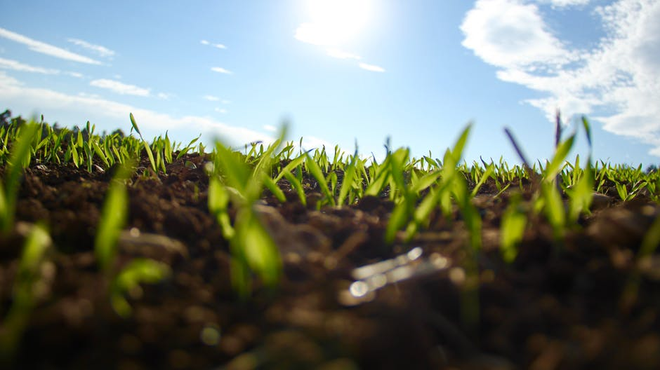 Reduce tu huella ecológica con productos biodegradables